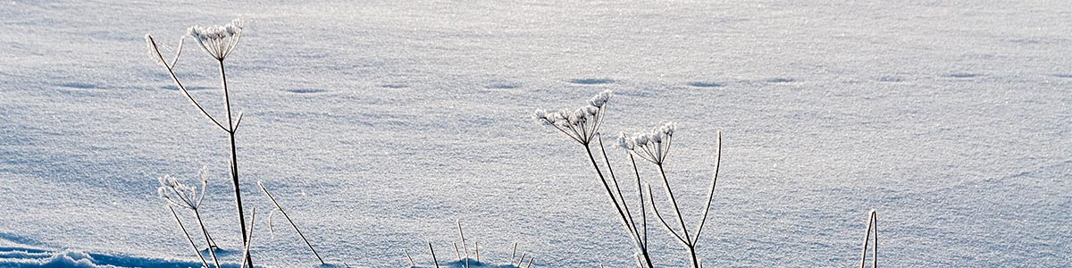 Header Winter Impressionen 206