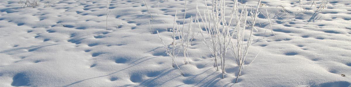 Header Winter Impressionen 212